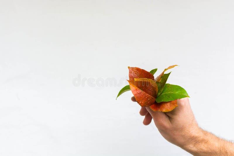 Листья осени в руке 2 стоковые изображения rf