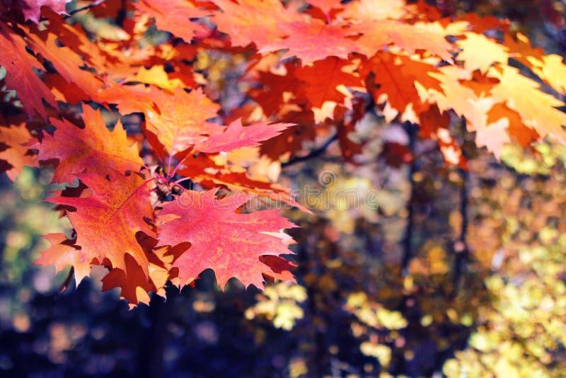 Листья осени в солнечном свете в лесе стоковое изображение rf