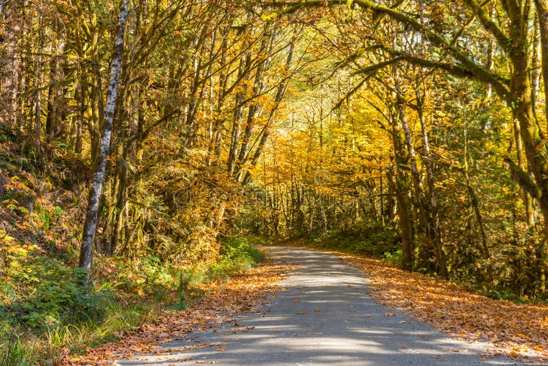 Листья осени гранича дорогу вдоль озера хлебопек, в каскадах Norh стоковые фотографии rf