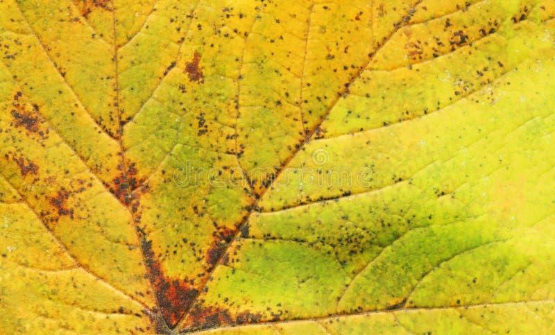 Листья осени закрывают вверх стоковая фотография