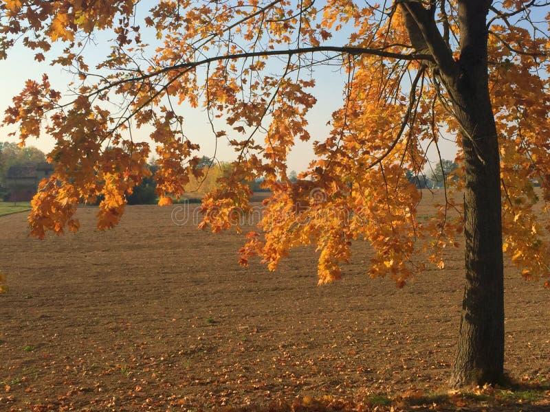 Листья осени золотые стоковая фотография