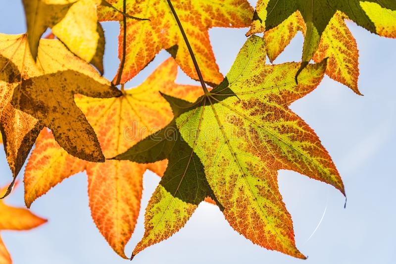 Листья осени и красивое голубое небо стоковое изображение rf