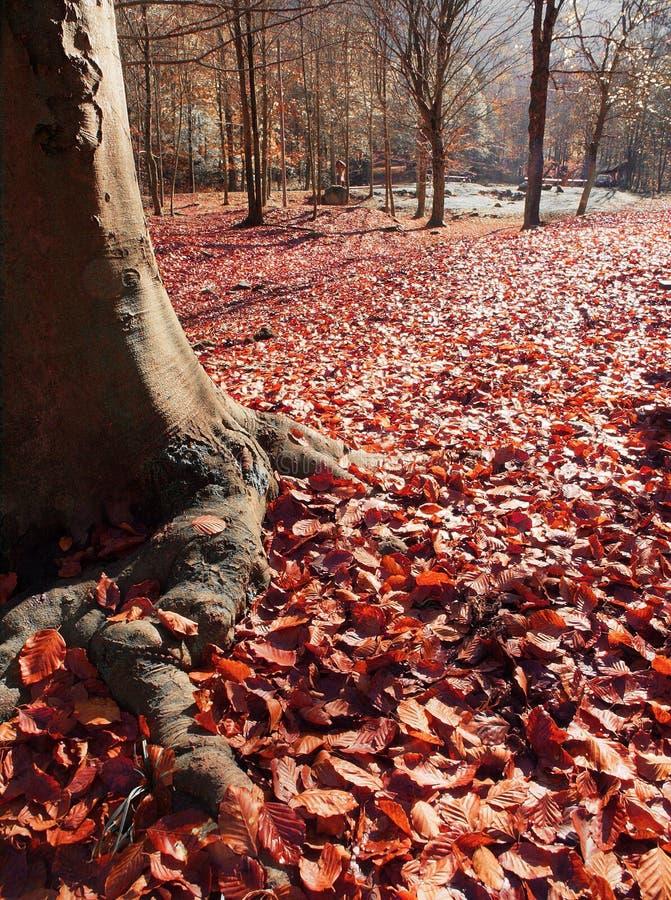 Download листья осени красные стоковое фото. изображение насчитывающей undergrowth - 6851292