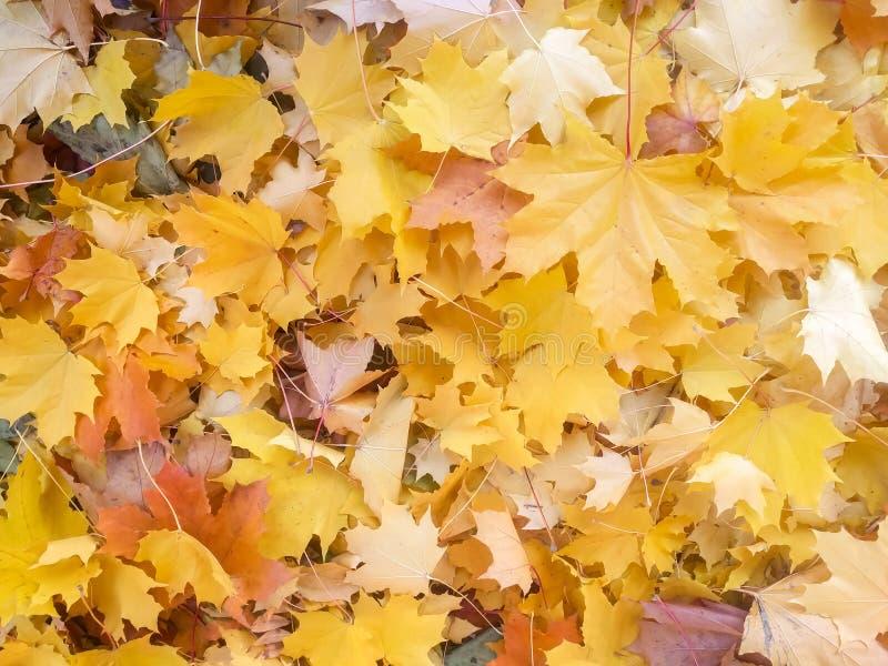 Листья осени осени красочные естественная предпосылка текстуры стоковое изображение rf