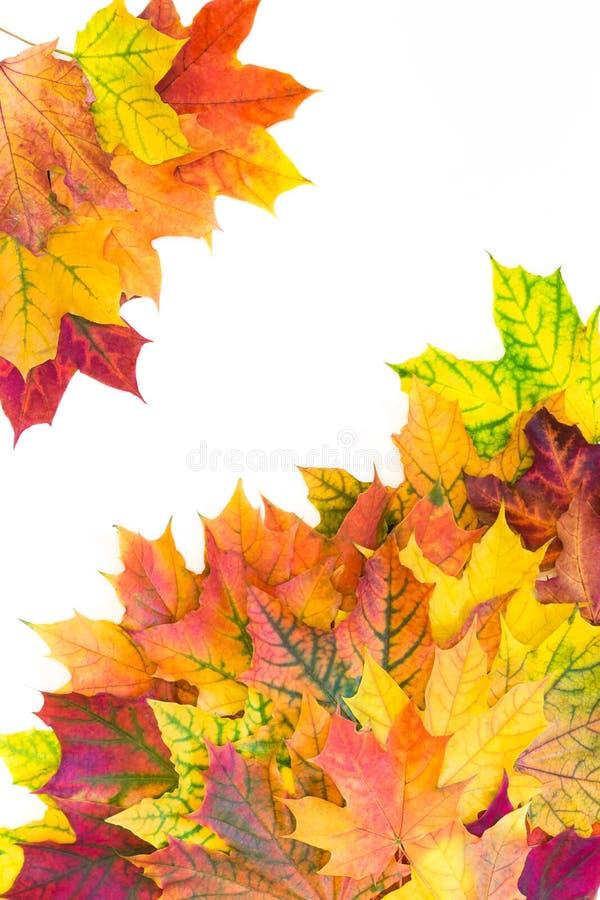 Листья осени красочные как граница с белым космосом для текста Взгляд сверху Рамка падения иллюстрация штока