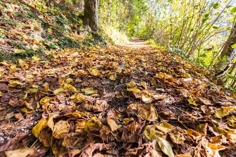 Листья осени листвы красочные закрывают вверх по майне леса стоковое изображение rf
