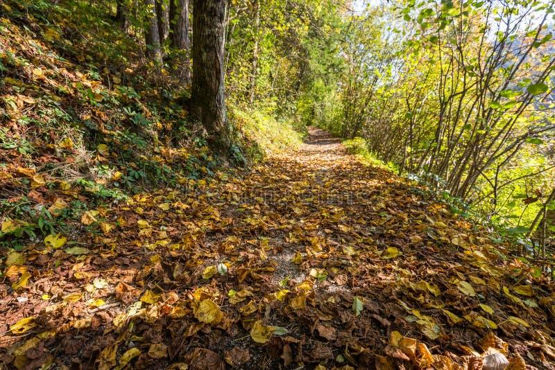 Листья осени листвы красочные закрывают вверх по майне леса стоковое фото