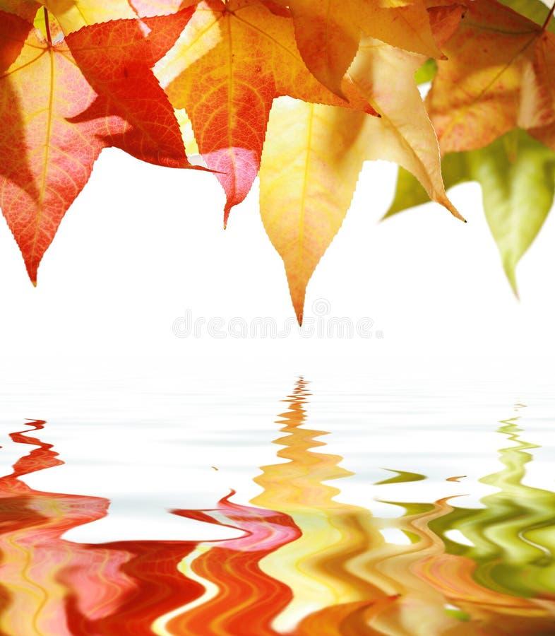 листья осени над водой стоковые фотографии rf