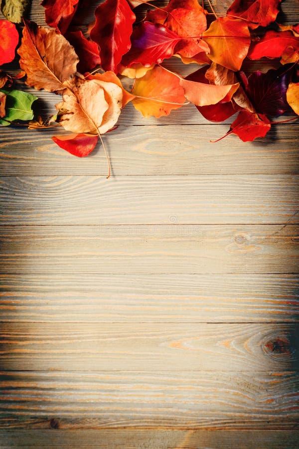 Листья осени на деревянной доске стоковое фото rf