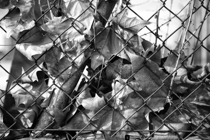 Листья осени на загородке стоковая фотография rf