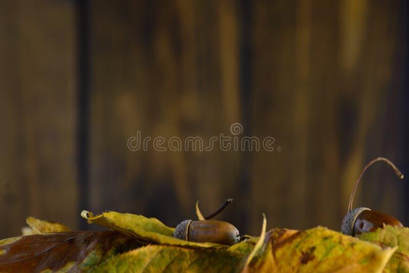 Листья осени на коричневой предпосылке деревянной доски стоковая фотография rf