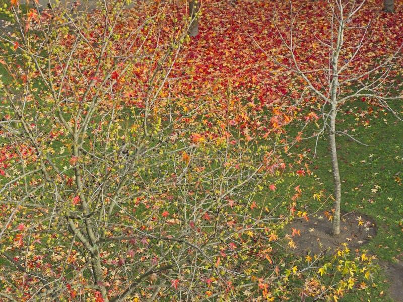Листья осени на площади da CÃtara, Понтеведре стоковое фото