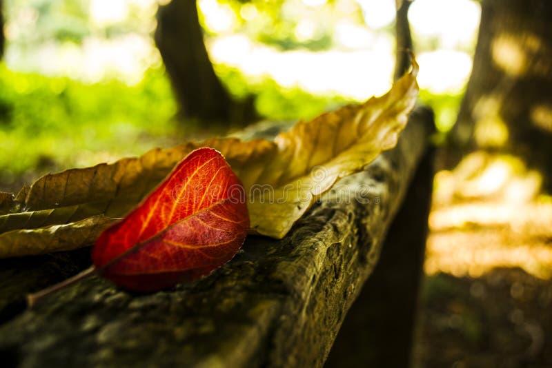 Листья осени над темной древесиной стоковая фотография rf