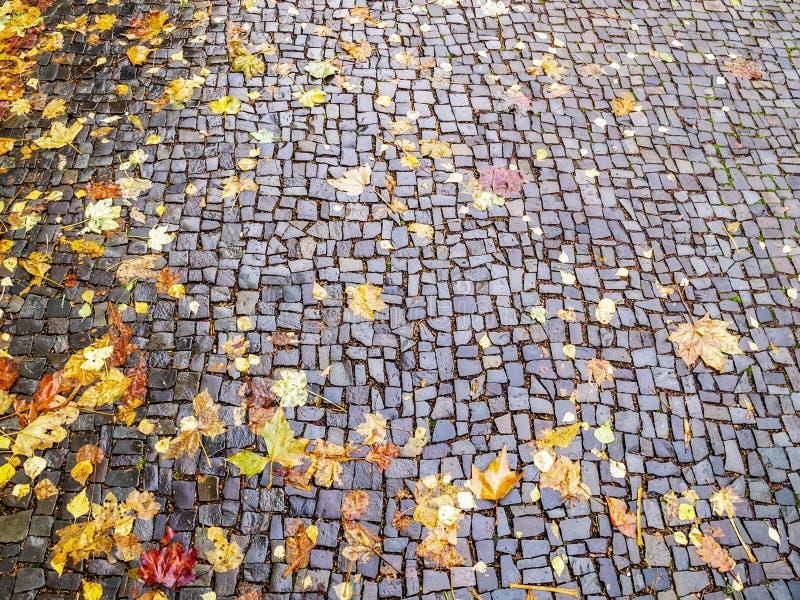 Листья осени на улице булыжника в Аахене Германии, предпосылке текстуры стоковое изображение