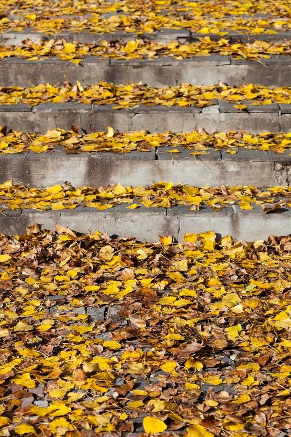 Листья осени на шагах стоковые фотографии rf