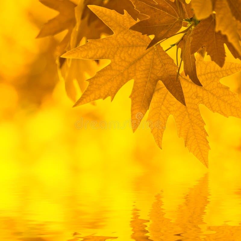 листья осени отражая воду иллюстрация вектора