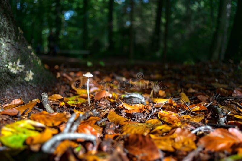 Листья осени падают на грибки леса в красивом солнечном свете стоковое изображение