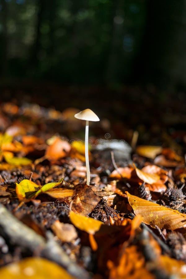 Листья осени падают на грибки леса в красивом солнечном свете стоковые фото