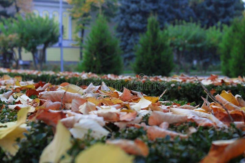 Листья осени падают, Chisinaul, Молдавия стоковое фото