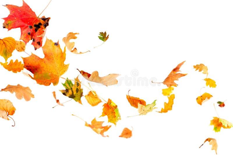 листья осени падая стоковые изображения rf
