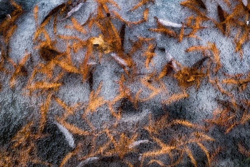 Листья осени под льдом стоковое изображение rf