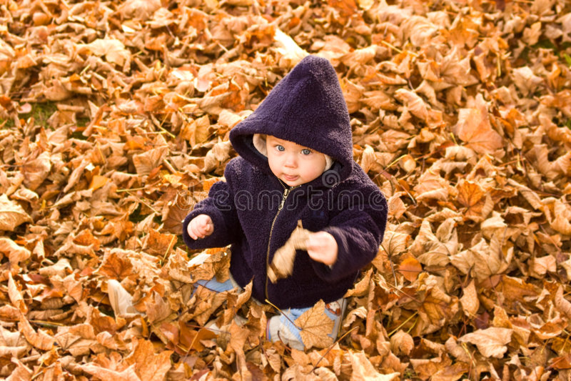 листья осени покрытые младенцем стоковая фотография