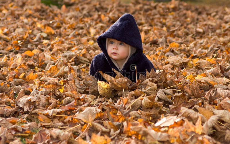 листья осени покрытые младенцем стоковое фото