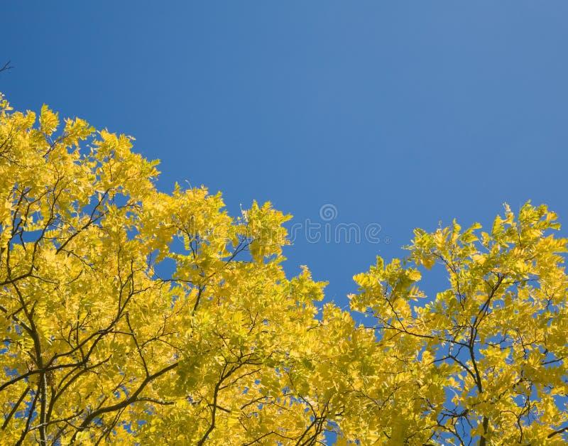 листья осени светя солнцу стоковое фото rf