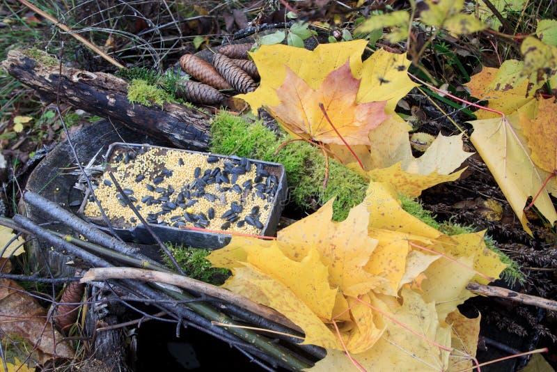 Листья осени, сухие ветви и фидер птицы лежат на деревянном пне Сезоны года стоковое фото