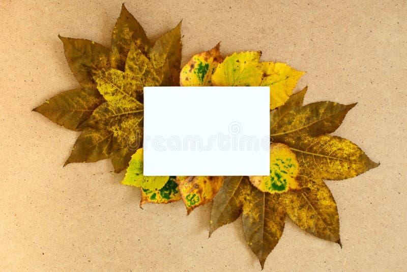Листья осени с белой карточкой космоса экземпляра бесплатная иллюстрация