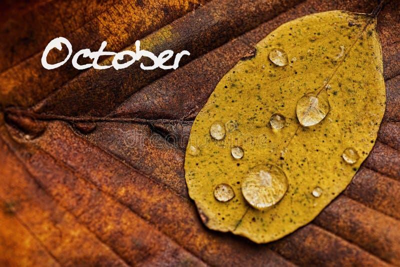 Листья осени с капельками дождя Обои концепции в октябре стоковая фотография rf