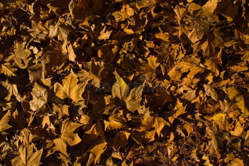 Листья осени упаденные на пол Мадрида стоковое изображение rf