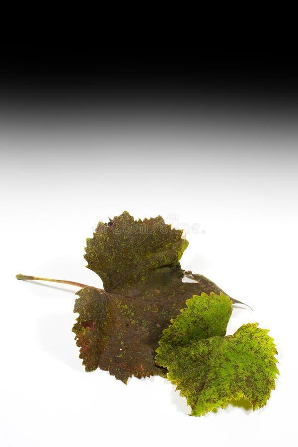 листья осени стоковые фото