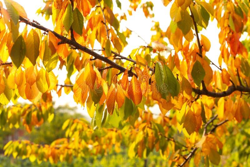 Download Листья осени стоковое фото. изображение насчитывающей красно - 33727470