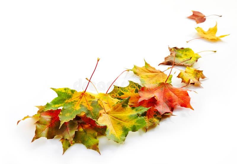 Download Листья осени стоковое фото. изображение насчитывающей средства - 33728440