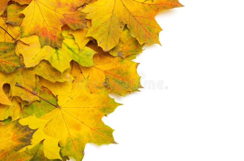 Download Листья осени стоковое фото. изображение насчитывающей обои - 33730416