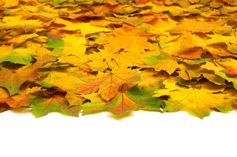 Download Листья осени стоковое изображение. изображение насчитывающей померанцово - 33730425