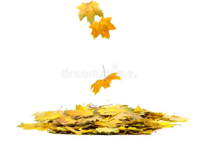 Download Листья осени стоковое фото. изображение насчитывающей yellow - 33730444