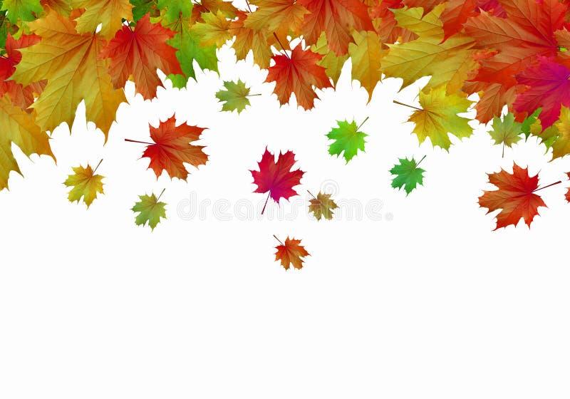 Download Листья осени стоковое изображение. изображение насчитывающей конспектов - 41650613