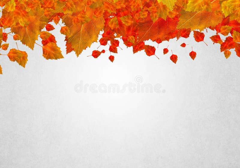 Download Листья осени стоковое изображение. изображение насчитывающей рамка - 41650781