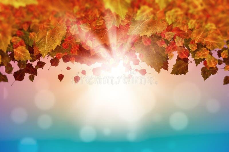 Download Листья осени стоковое изображение. изображение насчитывающей листья - 41650881