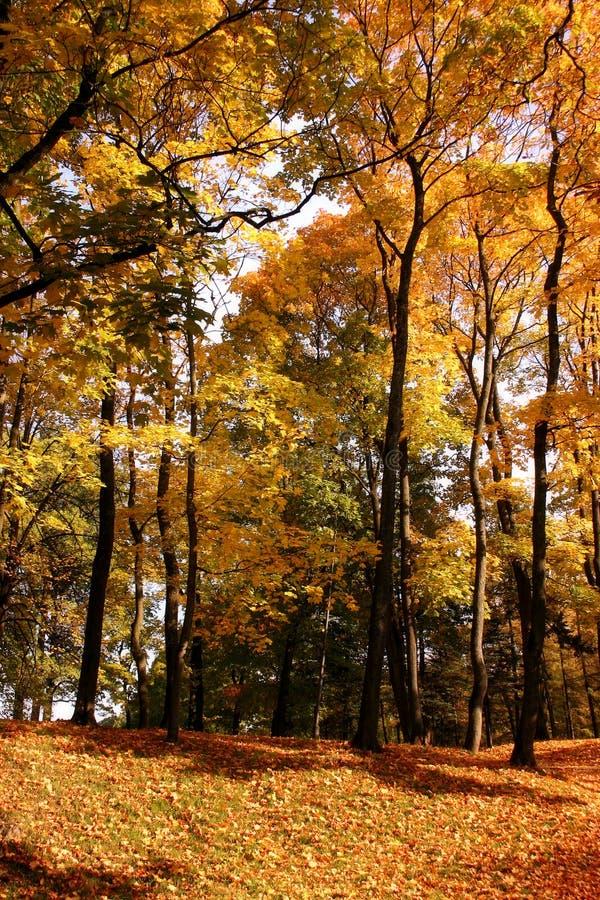 Download листья осени стоковое изображение. изображение насчитывающей валы - 495617