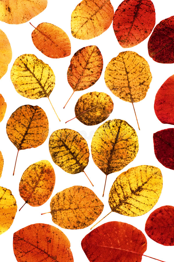 Download листья осени стоковое изображение. изображение насчитывающей цвет - 6861539