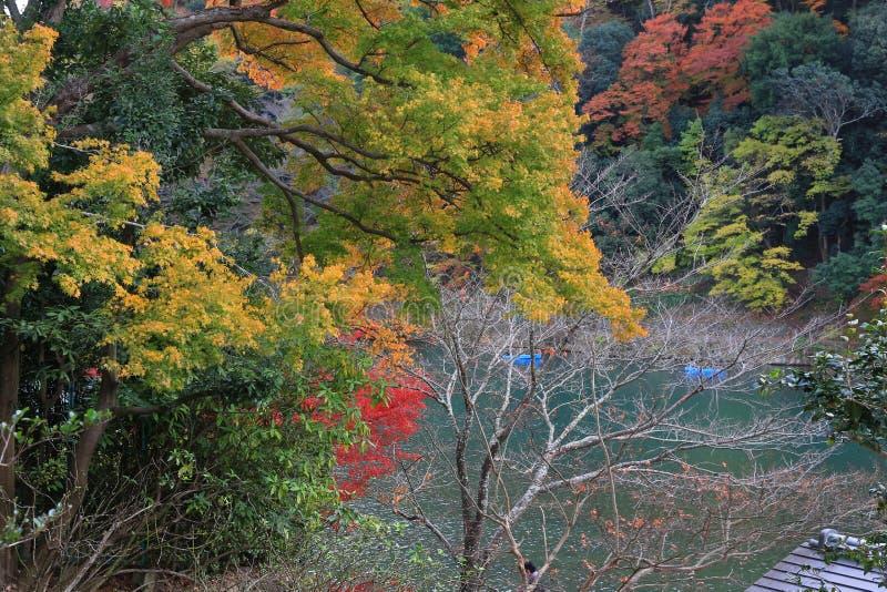 Листья осени Arashiyama стоковое изображение