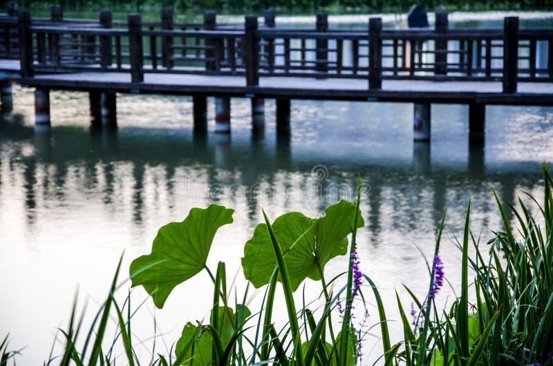 Листья лотоса и деревянный мост стоковое изображение