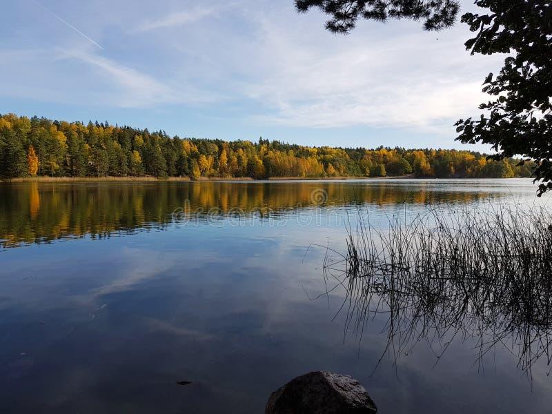 Листья отражения осени озера Rösjön Швеция стоковая фотография