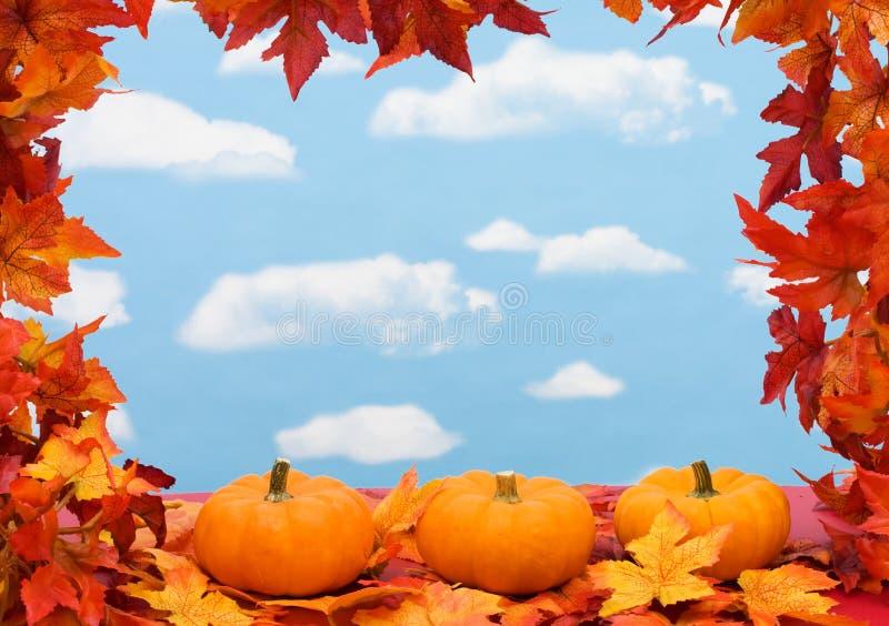 листья падения граници стоковые изображения rf