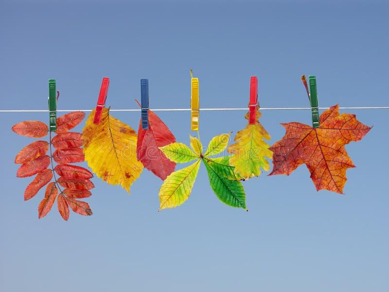 листья падения засыхания стоковые изображения rf