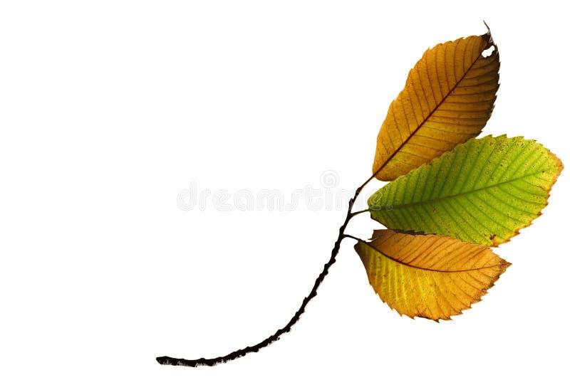 листья падения осени стоковое фото rf
