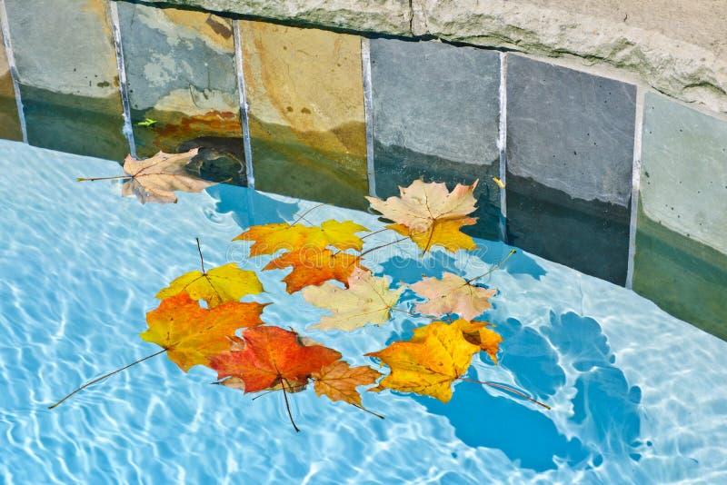 Листья падения плавая в бассеин стоковое фото rf